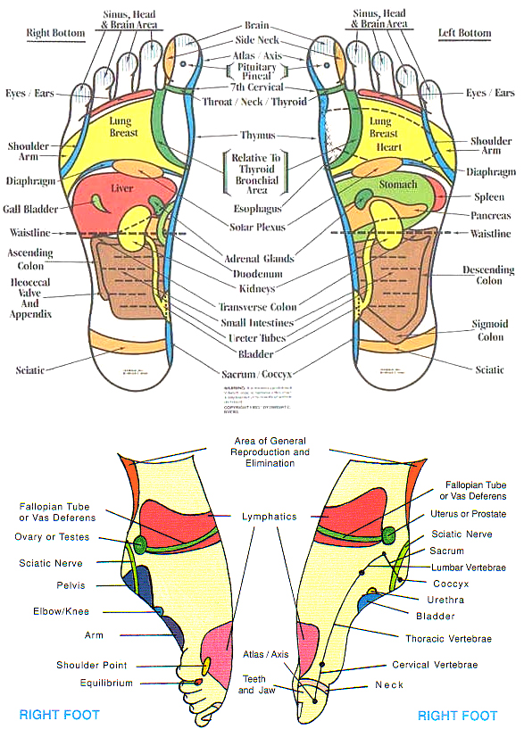 Reflexology chart foot heart impulsar co